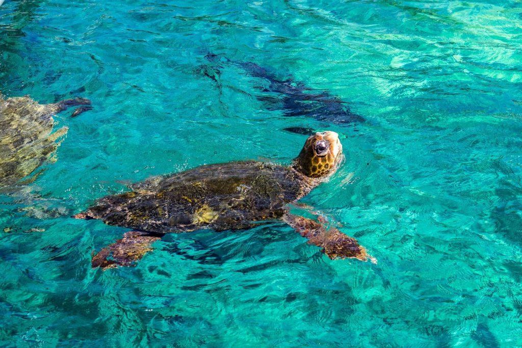 schildpadden curacao snorkelen