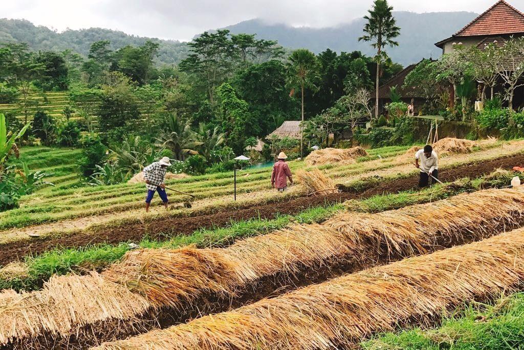 Ga eens naar het Oosten van Bali