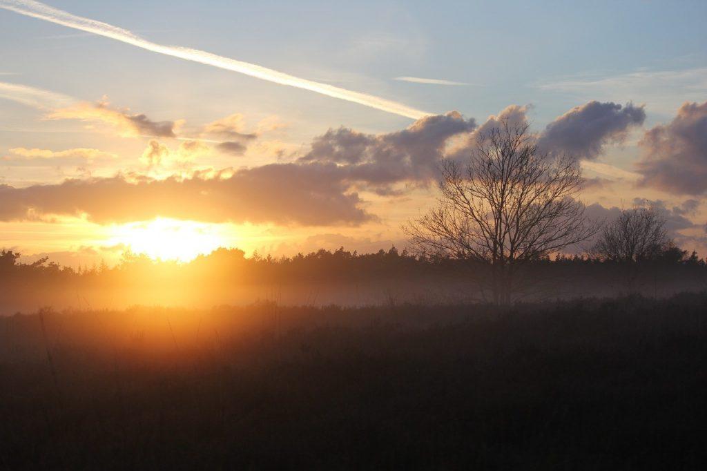 Op stap in eigen land: dagje naar de Veluwe