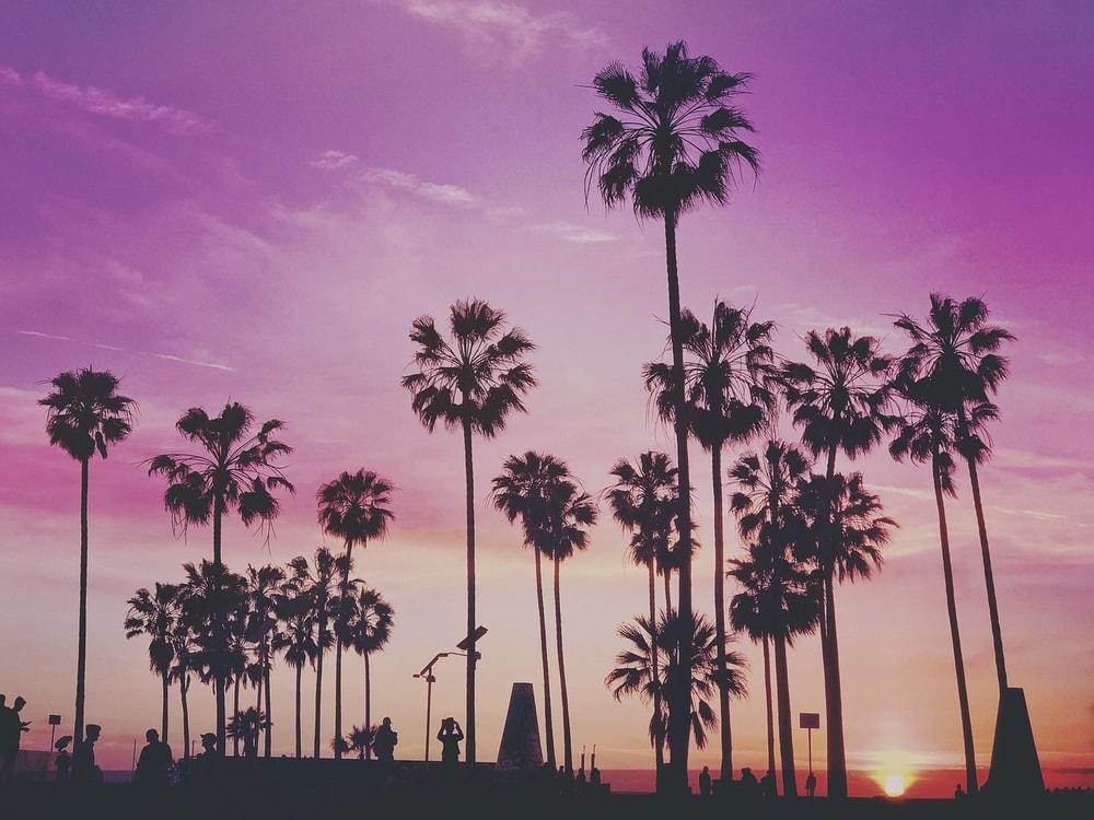 Wat te doen in Miami – 10x de leukste hotspots