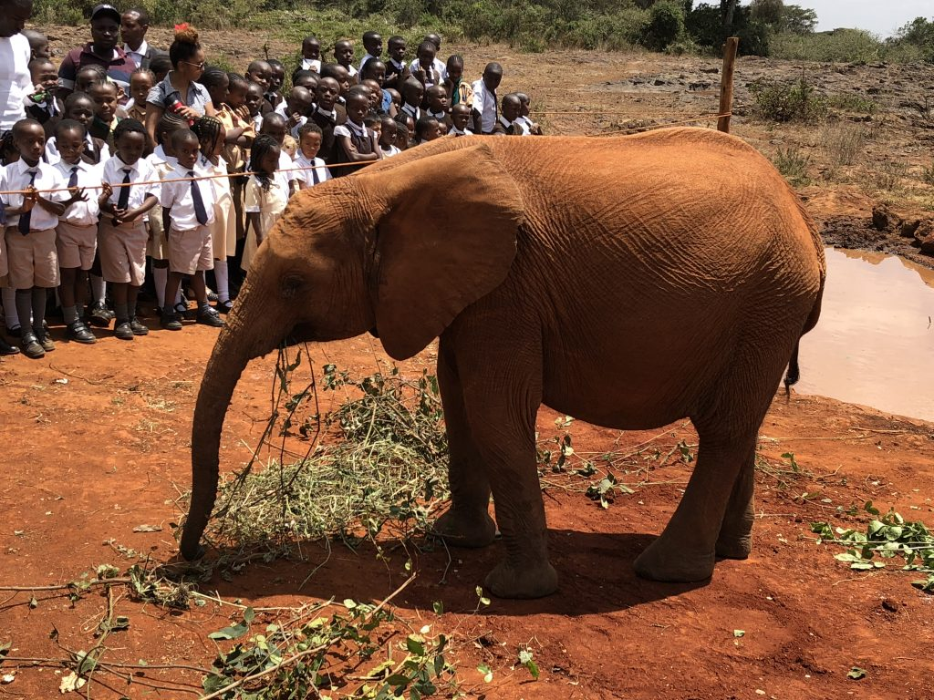 Een dag in Nairobi: Elephant Orphanage en Giraffe Center
