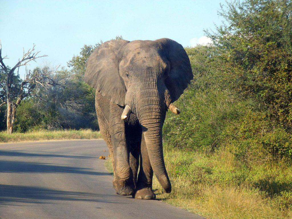 7 tips voor een onvergetelijke safari in Kruger National Park