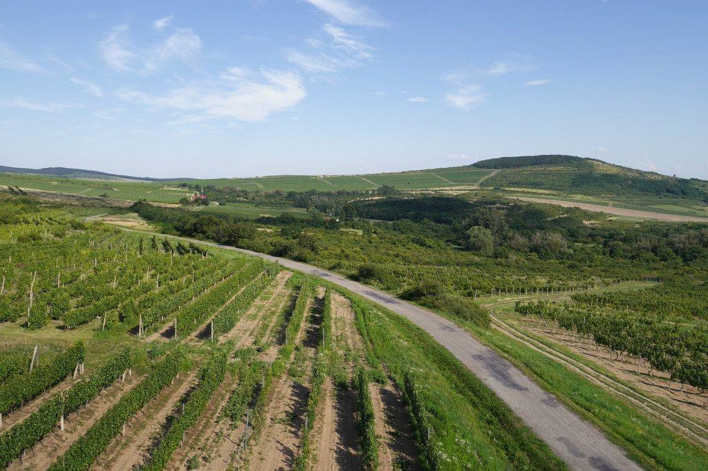 De 5 mooiste wijnlanden om te bezoeken