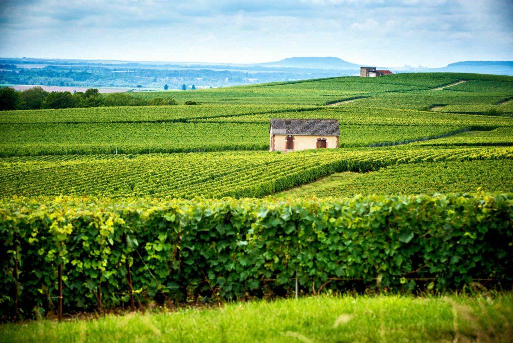 Wijn proeven in de Champagne streek