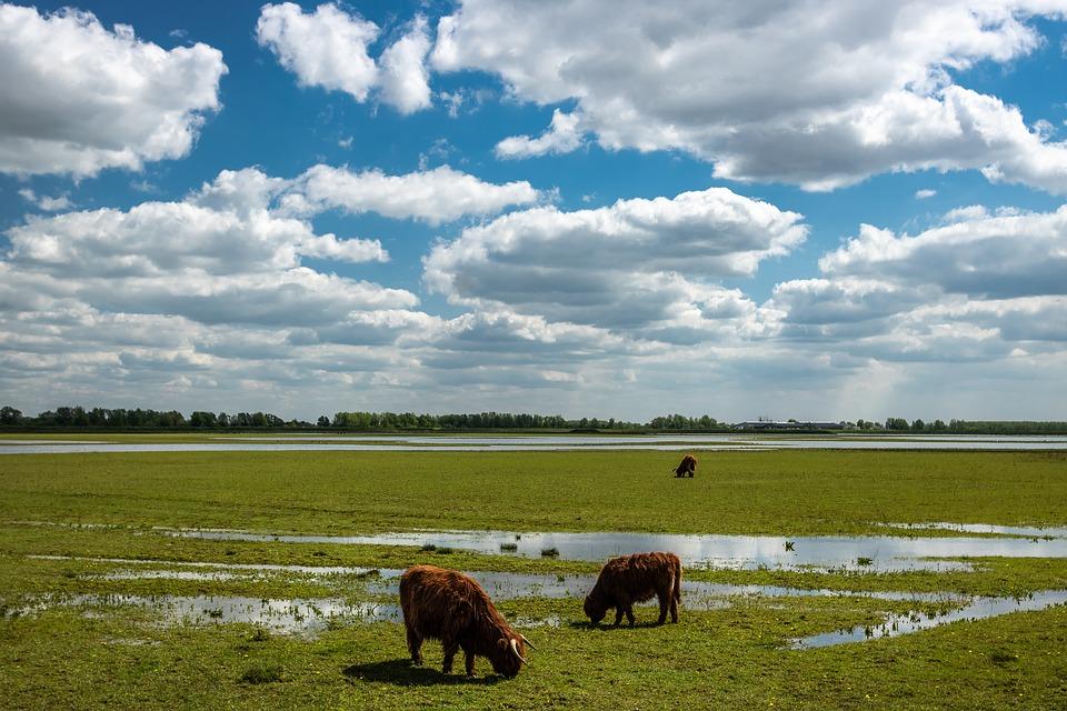Wat te doen in de Biesbosch: 8 activiteiten voor een onvergetelijk bezoek