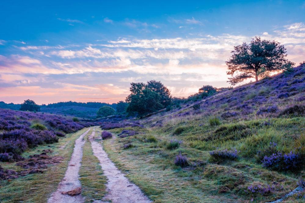 5x de leukste plekken in Nederland om te wandelen
